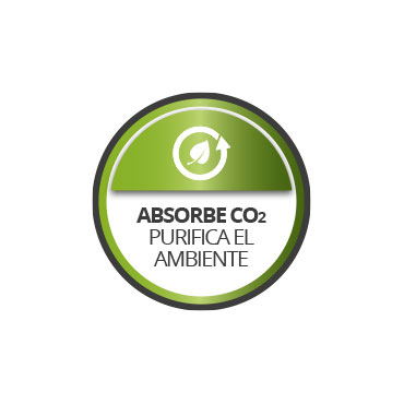 Absorbe CO2. Purifica el ambiente.
